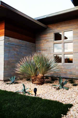 Exterior-6-Cactus